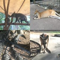 オーストラリア・ケアンズで動物と触れ合う