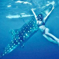 セブ島で世界唯一ジンベイザメとの遊泳体験